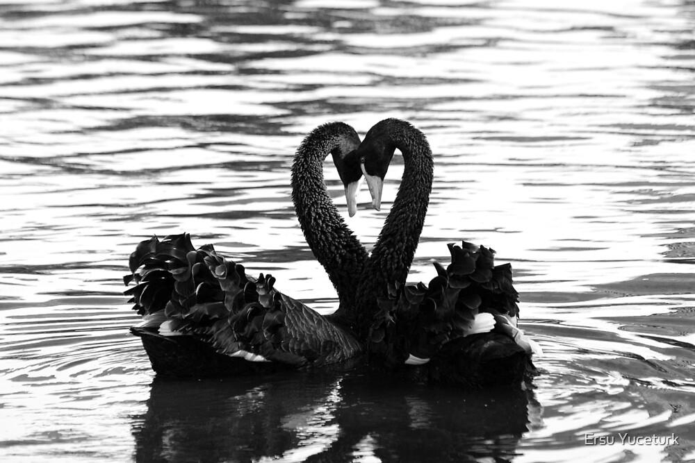 Swan sign language by Ersu Yuceturk