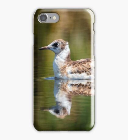 Juvenile seagull on water iPhone Case/Skin
