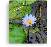 Bee on a Waterlily  Canvas Print