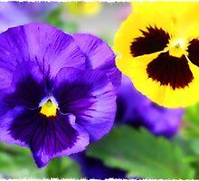 Purple and Yellow Pansies by Lindasartwork
