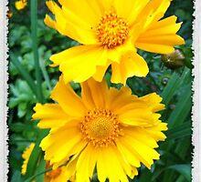 Yellow Wildflowers by FedericoArts
