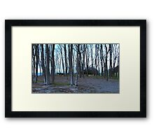 Seattle Trees at Discover Beach Framed Print