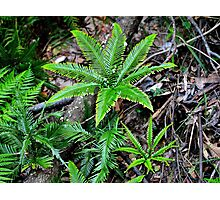 Prehistoric Ferns Photographic Print