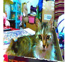 Cuddles Kitty Cat Photographic Print
