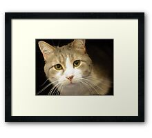 Kennel Cat Tabby Mix Framed Print
