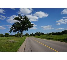 Tree by the road  Photographic Print