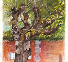 Asolo PIazza Tree by Dai Wynn