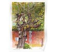 Asolo PIazza Tree Poster