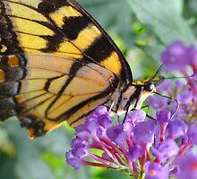 Zebra Swallowtail Butterfly by FedericoArts