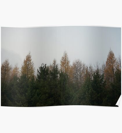 Pine trees fall Poster