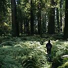 Wandering through redwood groves by Hotaik  Sung