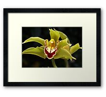 Wonderful Green Orchid Framed Print