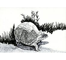 Turtle Sketch Photographic Print