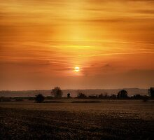 Sunset Sojourn by Vicki Field