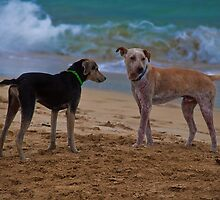Panama. Bocas del Toro. Red Frog Beach. Two dogs. by vadim19
