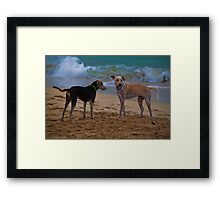 Panama. Bocas del Toro. Red Frog Beach. Two dogs. Framed Print