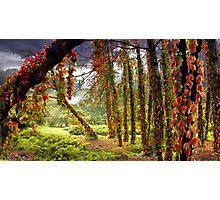 Enigma Trees Photographic Print