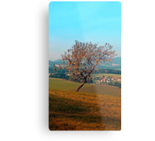 Tree on indian summer afternoon | landscape photography Metal Print