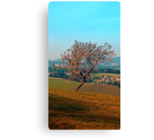 Tree on indian summer afternoon | landscape photography Canvas Print