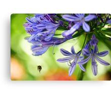 Pollen on my back Canvas Print