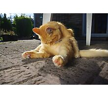 Ginger cat licking fur on patio Photographic Print
