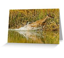 Deer Running Through Salt Water Marsh Greeting Card