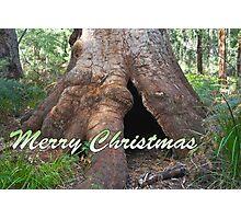 Giant Tingle Tree, Valley of Giants, WA Photographic Print
