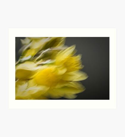 Yellow and Grey - Impressionist Daffodils Art Print