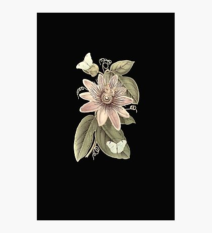 Flowering Butterflies Photographic Print