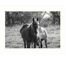 Mare and her Colt. Art Print