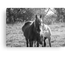 Mare and her Colt. Metal Print