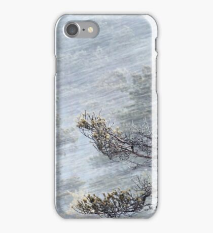 12.1.2017: Pine Tree in Blizzard II iPhone Case/Skin