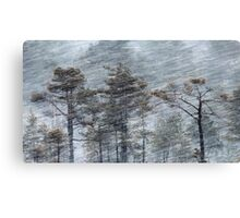 12.1.2017: Pine Trees in Blizzard Canvas Print