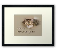 What's New Pussycat - Lily the Cat Framed Print