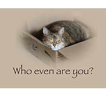 Who Even Are You - Lily the Cat Photographic Print