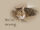 We're Moving Notification Greeting Card - Lily the Cat by MotherNature