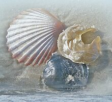 Spirit of the Sea - Seashells and Surf by MotherNature