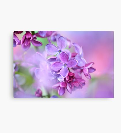 lilac on colorful background Canvas Print