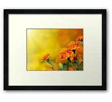 tagetes flowers Framed Print