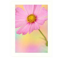 cosmos flower Art Print