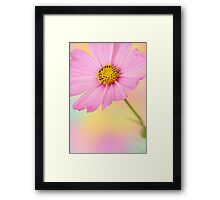 cosmos flower Framed Print