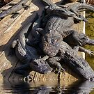 Alligator Party by TJ Baccari Photography