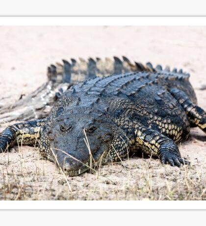 Crocodile lining in the bush, game reserve Botswana Sticker