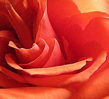Orange Kisses by trueblvr