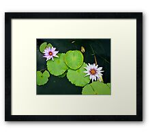 Lily Pads & Flowers - original nature photography  Framed Print