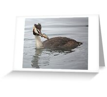Great Crested Grebe with Perch Greeting Card