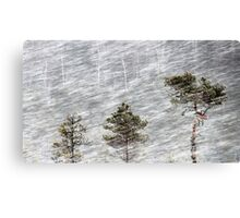 12.1.2017: Pine Trees in Blizzard II Canvas Print