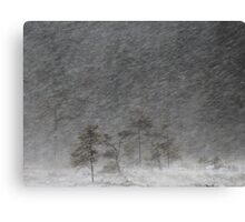 12.1.2017: Pine Tree in Blizzard III Canvas Print