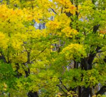 Maple colors in autumn Sticker