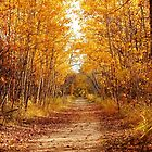 Autumn on the Harte Trail by Larry Trupp